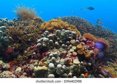 Colorful tropical underwater coral garden. Healthy coral reef with variety of fish and underwater wildlife. Scuba diving photography from the aquatic enviroment.