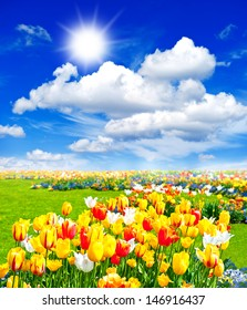 colorful tulip flowers field. spring landscape with sunny blue sky