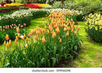 Colorful tulip flowers in spring park. Flower landscape