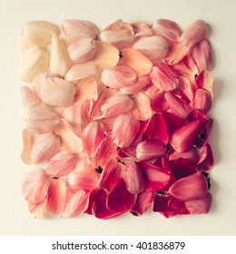 Colorful tulip petals pattern in shape of a square. Flat lay.