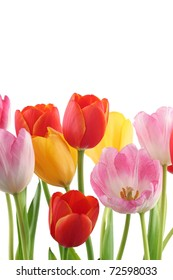 Colorful tulips background