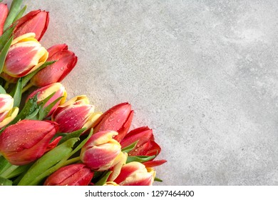 Colorful tulips, bouquet of flowers, spring easter background, gift for mother's day or card for women's day