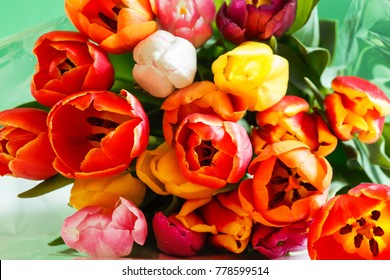 colorful tulips closeup