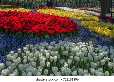 Colorful tulips at a famous tulips park during tulips festival in Istanbul, Turkey.