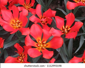 colorful tulips at the garden (part4)