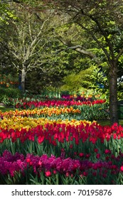 Colorful tulips, hyacinths and crown imperials in park in spring