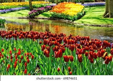 Colorful Tulips in Keukenhof Gardens.