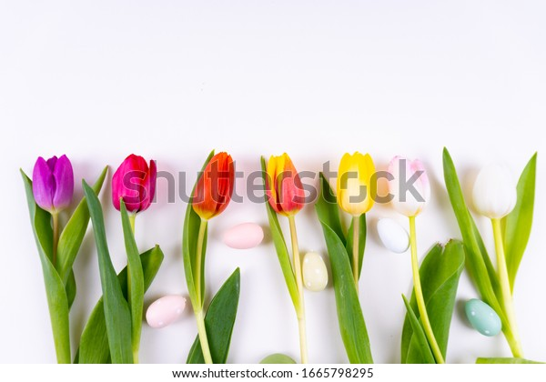 Colorful tulips laying in a row with easter eggs on white background with copy space