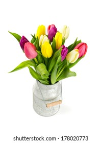 colorful tulips in a milk can over white