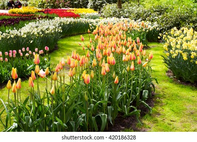 Colorful tulips, narcissus, hyacinths, lily, hydrangeas, muscari flowers in spring park