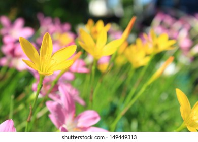 Colorful tulips on flower bed