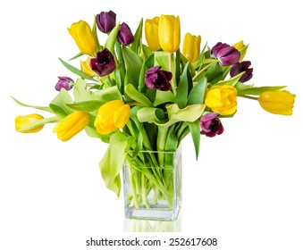 colorful tulips on the white background