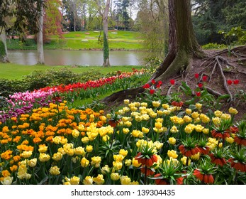 Colorful tulips in the park. The lake in the park. Spring landscape.