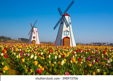 colorful tulips in the park and wooden windmills on background