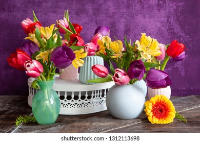 Colorful tulips in spring in front of purple background