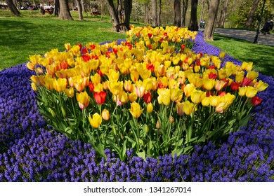 colorful tulips in a spring garden