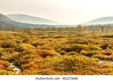 Colorful tundra with patches of dwarf birch and bilberry bushes standing above freshwater streams, Hibiny mountains above the Arctic Circle, Russia