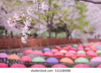 a colorful umbrella decoration in a row along the canal beside with a wooden bridge walkway in the famous cherry blossom Jinhae Gunhangje Festival Jinhae province at the south of Korea near Busan city