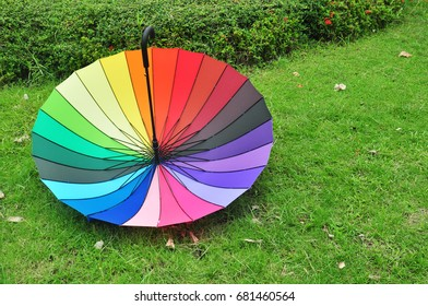 colorful umbrella on green background