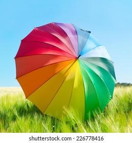 Colorful umbrella in a wheat field.