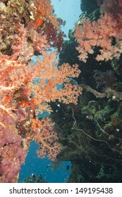 Colorful underwater landscape of red sea while scuba diving