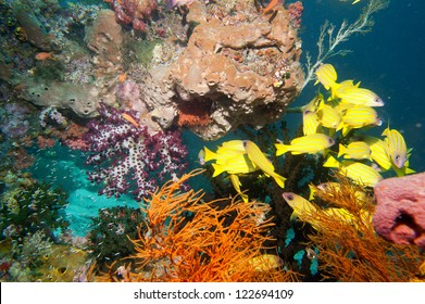 The colorful underwater realms of Raja Ampat, Papua Indonesia