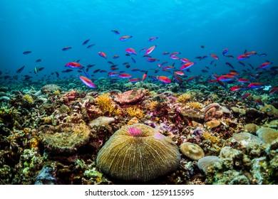 Colorful underwater reef scene with lots of small colorful fish and corals
