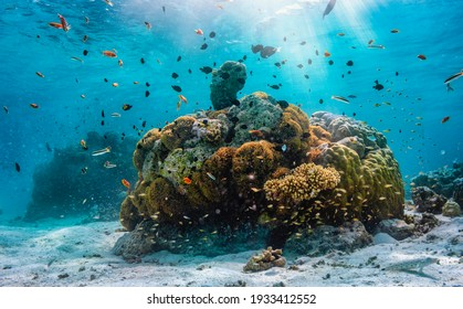 A colorful underwater reef with tropical fish in the Maldives, Indian Ocean