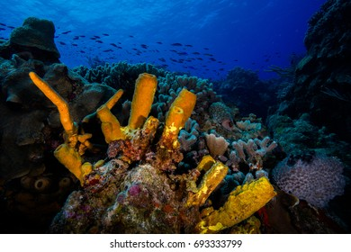 Colorful Underwater World in Cozumel, Mexico - Scuba Diving