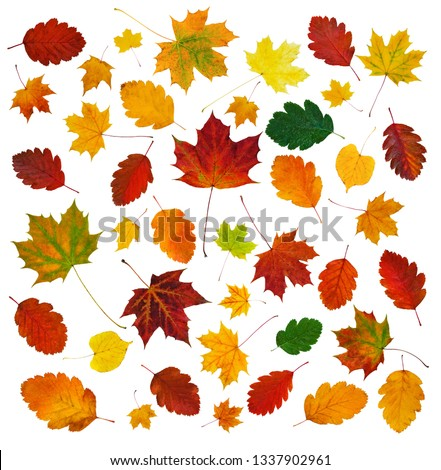 colorful-various-fall-leaves-abstract-45