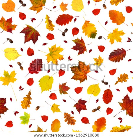colorful-various-fall-leaves-physalis-45