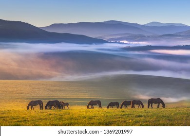 Colorful view of a herd of horses peacefully grazing. Folded hills in a blue haze. Radiant landscape.Absolutely perfect picture. Sunny meadow covered with blue-pink fog.Altai Republic.Siberia. Russia.