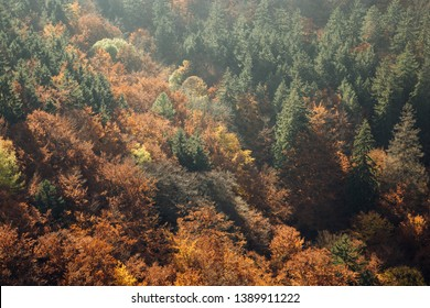 Colorful views in the fall on the valley in the vicinity of Ilsenburg, Harz