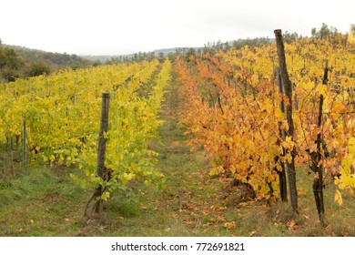 Colorful vineyard in Chianti, Tuscany, Italy in Autumn.