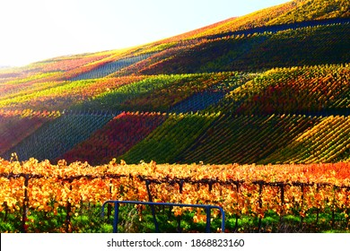 colorful vineyards in Ahr valley during November