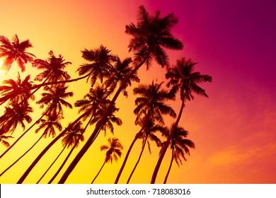 Colorful vivid beach sunset with tropical palms trees silhouettes and shining sun