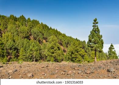 Colorful volcano landscape on top of the Cumbre Vieja in La Palma, Spain.
