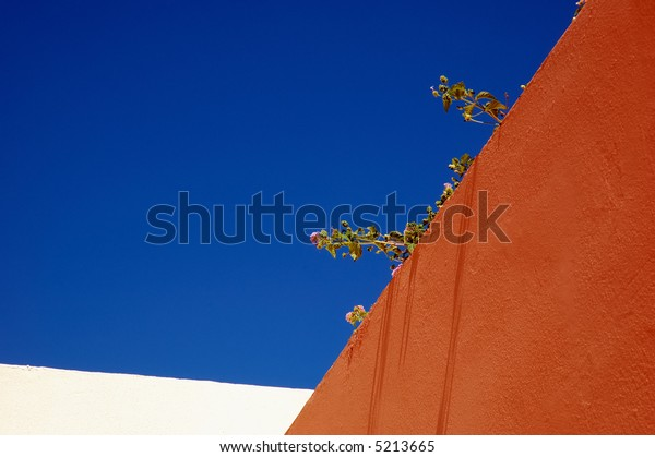Colorful wall and flowers