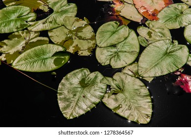 Colorful water plants in Abant