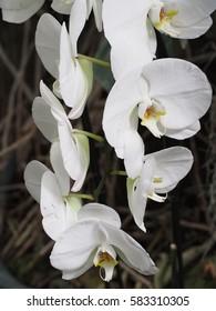 colorful white Orchids flowers detail petal