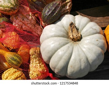 Colorful white pumpkin, bumpy gourds and squash for sale for holiday cooking and decoration in the USA