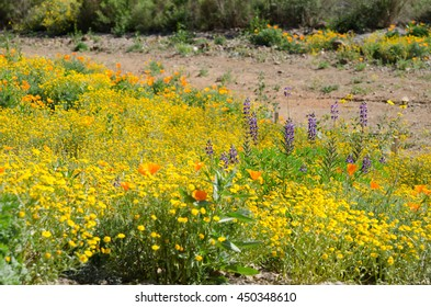Colorful wild flower field during spring