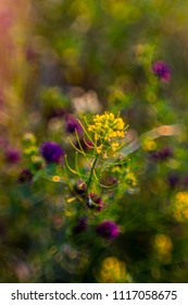 colorful wild flowers in the meadow