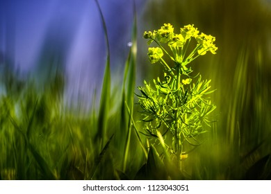 colorful wild meadow with flower
