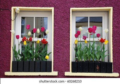 colorful windows with tulips in the window-sill