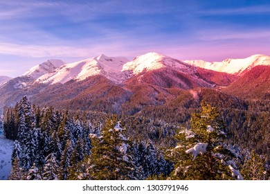 Colorful winter landscape with pink sunset view, pine trees and snow mountain peaks of Pirin, Bulgaria