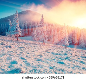 Colorful winter sunrise in the Carpathian mountain forest. Ukraine, Europe. Happy New Year!  Instagram toning.