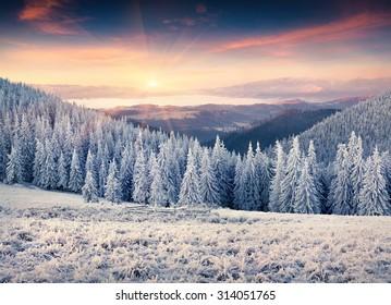 Colorful winter sunrise in the Carpathian mountains. Kostrycha ridge, Ukraine, Europe.