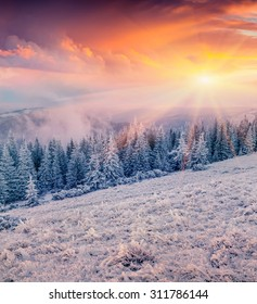 Colorful winter sunrise in the mountain forest