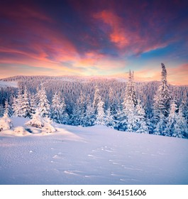 Colorful winter sunset in the Carpathian mountains. Kostrycha ridge, Ukraine, Europe.